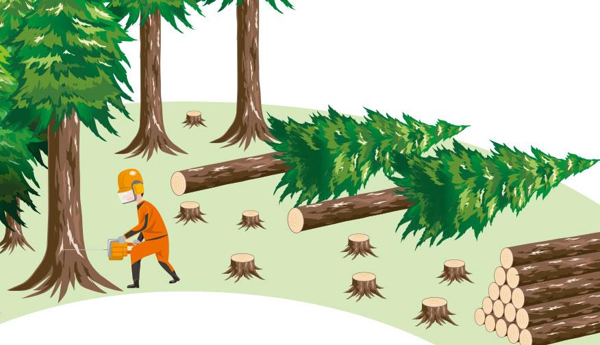 木は伐って使う方が環境にやさしい?