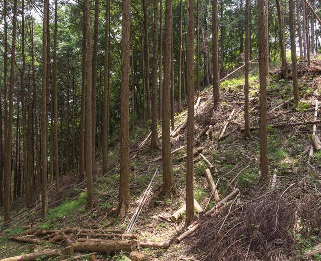 作庭家が挑戦する森林の自然再生。